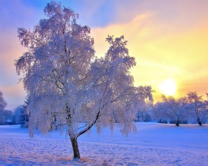 Winter-snow-trees-frost-sky-sun-mist_1280x1024