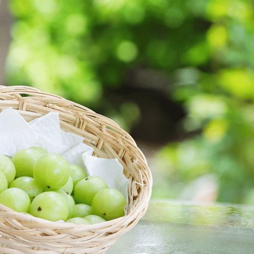 Fruit Amalaki