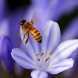 Allergies pollen de saison